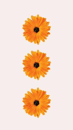 September Phone Wallpapers - Stars & Flowers — THE INTROVERT BOSS CO.