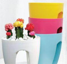 150115-vaso-greenbo-sacada-varanda-plantas-jardinagem-paisagismo-acacia-garden-center-horto-rj-chacara-02-cactus