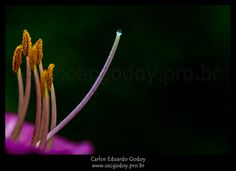 IMG_3692-Editar-2 | Flickr – Compartilhamento de fotos!