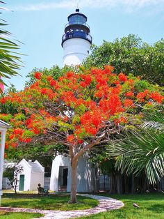 Key West Lighthouse and a blooming royal poinciana tree, fl Key West Florida, Old Florida, Visit Florida, Florida Living, Vintage Florida, Florida Usa, Florida Vacation, Florida Travel, Florida Keys