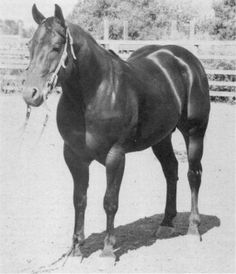 Poco Tivio - Quarter Horse Legend