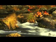 A mountain stream flows through autumn foliage (Loop).     Purchase this clip from A Luna Blue:   http://www.alunablue.com/nature-stock-footage/autumn-gold/clip-08.html     A Luna Blue Stock Video.   Imagery for Your Imagination.   http://www.alunablue.com