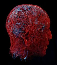 This is a picture shows a human head with actual blood vessels. From Gunter von Hagans Bodyworlds exhibits. Fascinating look at the human inside all of us. The Human Body, Human Head, Anatomy Art, Human Anatomy, Brain Anatomy, E Learning, Circulatory System, Limbic System, Medical Illustration
