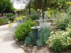 """Dorcas Utter Memorial Sensory Garden at The Water Conservation Garden """"Scented geraniums and a peppermint tree are but two examples of  water-wise plants that delight the senses."""" (scented geraniums are EDIBLE)"""