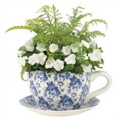 Ferns & flowers planted in a teacup.