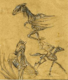 Thestral Sketches by PolarFox13.deviantart.com on @deviantART
