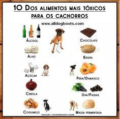 Comprar alimento e dar banho está longe de ser o que um cachorro precisa. Quem compra ou adota um cãozinho achando que é assim que funciona, logo verá que houve um grande engano.