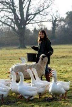 Feed The Ducks & Sheep