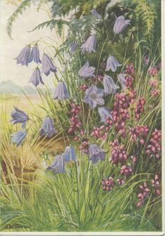 MEDICI POSTCARDS Wild Hyacinth M W Tarrant