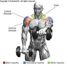 SHOULDERS - FRONT DUMBBELL RAISE With optimal health often comes clarity of thought. Click now to visit my blog for your free fitness solutions!