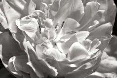 Cuadro Fancy Flower I