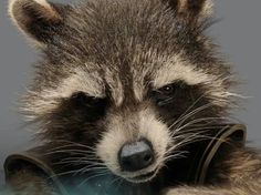 Guardians of the Galaxy - Rocket Racoon!