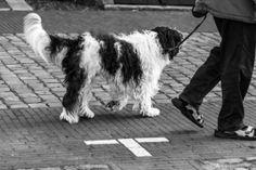 Dog Black and White
