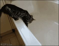 This cat who was too curious about the bathtub. | 28 Cats Having A Way Worse Day Than You. Click for animation