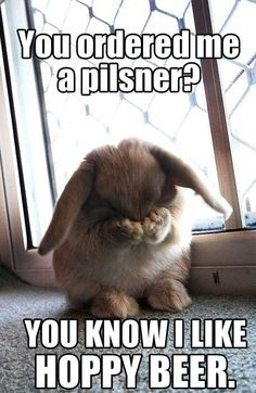 Cutest bunny pose ever!