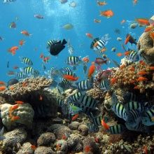 Valokuvatapetti - Coral Colony