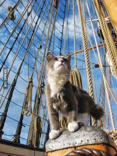 Tonight, we sail!