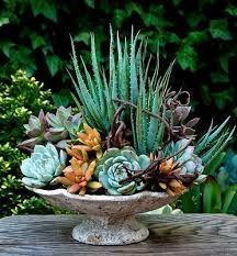 Image result for succulent perch