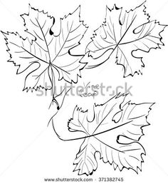 Grape Leaf Vector Stock Photos, Royalty-Free Images ...