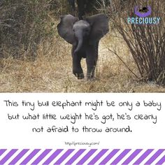 Brave Baby Elephant Makes Sure Nobody Messes With His Mom  https://www.thedodo.com/brave-baby-elephant-charges-video-2030359538.html