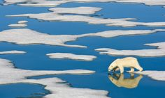 Climate change: why the Guardian is putting threat to Earth front and centre National Geographic, Arctic Ice, Sea Ice, Call Of The Wild, Climate Change Effects, Environmental Issues, Natural Phenomena, North Pole, Global Warming
