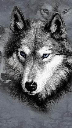 Animals wolf drawing black-and-white sketch blueeyes Animal Drawings, Pencil Drawings, Art Drawings, Drawing Animals, Wolf Drawings, Drawing Drawing, Water Drawing, Pencil Art, Drawing Ideas