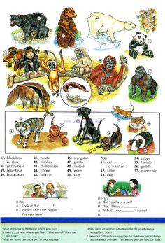 113 - ANIMALS AND PETS B - Picture Dictionary - English Study, explanations, free exercises, speaking, listening, grammar lessons, reading, writing, vocabulary, dictionary and teaching materials