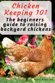 Chicken keeping for beginners. Everything you need to know to raise chickens, from chick to egg. How to choose a coop, what to feed chickens and more! What To Feed Chickens, Raising Backyard Chickens, Keeping Chickens, Pet Chickens, Urban Chickens, Backyard Farming, Chicken Coop Plans, Diy Chicken Coop, Chicken Chick