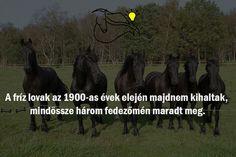 #lovak #fríz #black #érdekesség #nyeregebfel Marvel, Horses, Movie Posters, Film Poster, Horse, Billboard, Film Posters