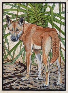 Linocuts by artist Rachel Newling of Australian wildlife, Dingo