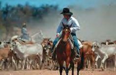 A jackaroo is a young man (feminine equivalent jillaroo) working on a sheep or cattle station, to gain practical experience in the skills needed to become an owner, overseer, manager, etc.The word originated in Queensland, Australia in the 19th century and is still in use in Australia and New Zealand in the 21st century. http://en.wikipedia.org/wiki/Jackaroo_(trainee)