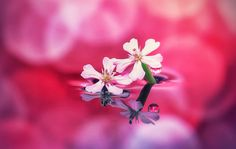 Beautiful+Flower+(1).PNG (1306×830)