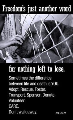 We all can do something !!    Freedom's just another word for nothing left to lose.  Sometimes the difference between life and death is YOU.      Adopt. Rescue. Foster. Transport. Sponsor. Donate. Volunteer. CARE.    Don't walk away.
