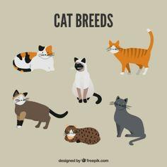 Paquete de razas de gatos