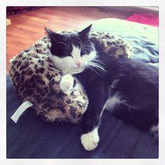 La vie de chat est dur !