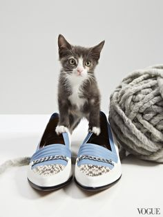 Cat and A Flat — Our daily guide to spring's best sandals, not to mention the cutest cats around. See more on Vogue.com.