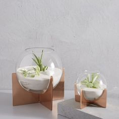 Round out your indoor garden with the modern shape of our Cross Base Terrariums. The simple globe container and copper-finished base provide the perfect home for succulents and small flowers. Terrariums, Glass Terrarium, Succulent Terrarium, Modern Planters, Indoor Planters, Indoor Garden, Air Plant Display, Plant Decor, Copper Decor