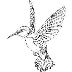 E696 – Fancy Hummingbird Left