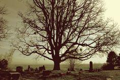 dundee cemetery tree..
