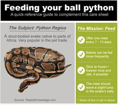 Mouse/Rat Size and Comparison Chart for feeding snakes
