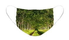 Row of Birch Trees Face Mask by Louise Tanguay. The face mask is machine washable. All face masks are available for worldwide shipping and include a money-back guarantee. Tree Faces, Birch Trees, Masks For Sale, Basic Colors, Mask Design, Color Show, Face Masks, Boho Shorts, Colorful Backgrounds