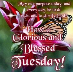 Have A Glorious And Blessed Tuesday! Happy New Month Quotes, Tuesday Quotes Good Morning, Happy Tuesday Quotes, Morning Greetings Quotes, Good Morning Friends, Good Night Quotes, Good Morning Good Night, Morning Sayings, Thursday Quotes