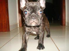 I want sooo bad! French bulldog