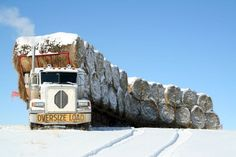 Old Truck Hauling Hay - Bing Images It's called a Hay Train. Big Rig Trucks, Dump Trucks, Cool Trucks, Train Truck, Road Train, Diesel Trucks, Diesel Cars, Cummins, Giant Truck