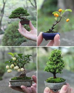 I especially love tiny bonsai