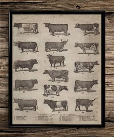 Vintage Types of Cattle | Farm Prints | Office Decor | Home Decor | Printable Wall Art | Vintage Wall Art | 8x10 | Instant Download |