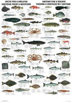 Arctic Fish & Shellfish