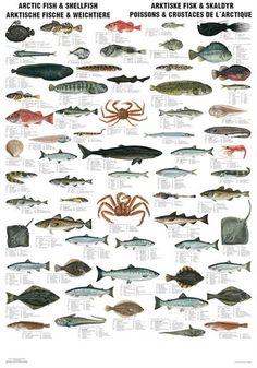 Arctic Fish & Shellfish