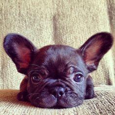 Baby Smoosh. Want.