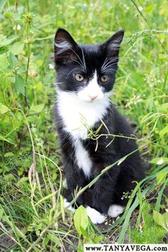 Kitten, Estonia Котёнок, Эстония (c) www.TANYAVEGA.com